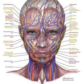 Anatomia twarzy