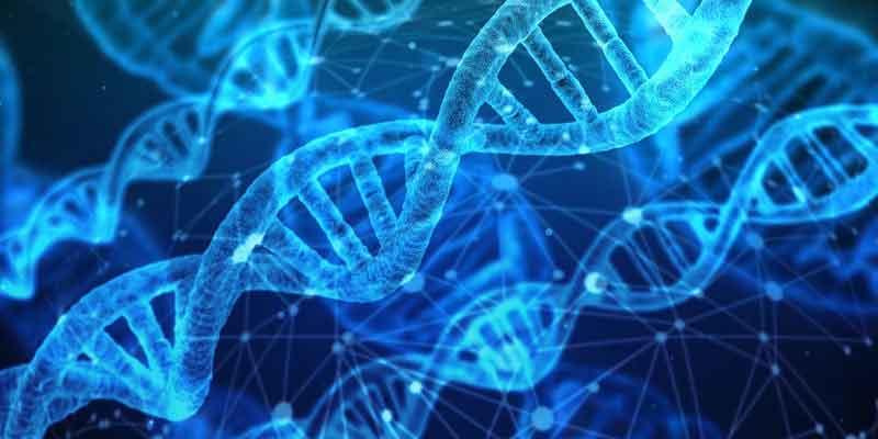 dna i telomery